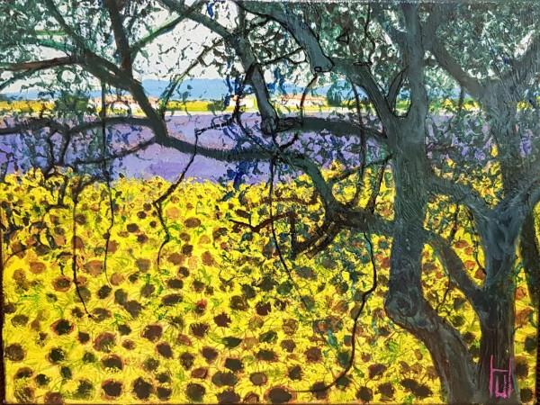 Uwe Herbst Sonnenblumen und Lavendel