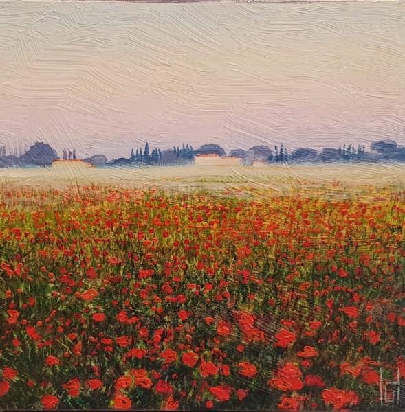 Uwe Herbst Mohn bei Arles