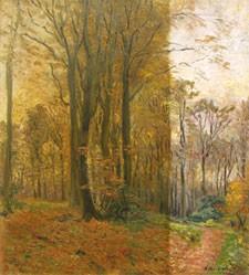 Nikotinentfernung-Wald